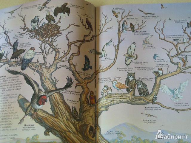 Иллюстрация 1 из 11 для Хищные птицы - Джон Веско | Лабиринт - книги. Источник: Iwolga