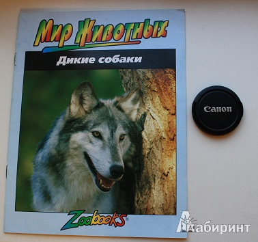 Иллюстрация 1 из 11 для Дикие собаки - Тимоти Байел | Лабиринт - книги. Источник: Ассол