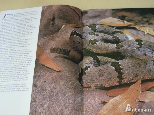 Иллюстрация 1 из 4 для Гремучие змеи - Бет Брюст   Лабиринт - книги. Источник: Iwolga