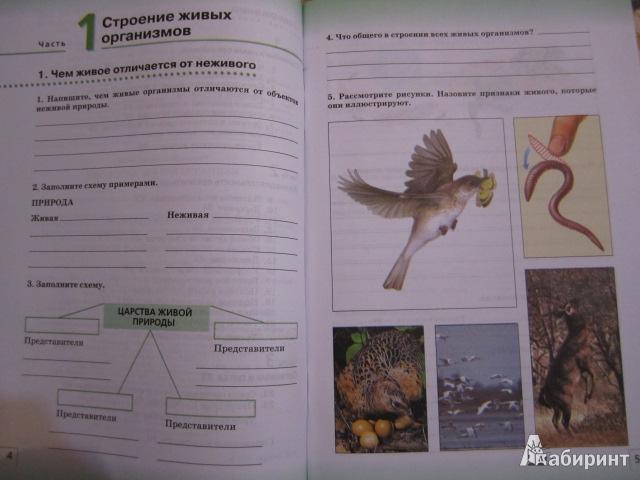 класс 6 гдз биология организмы живые