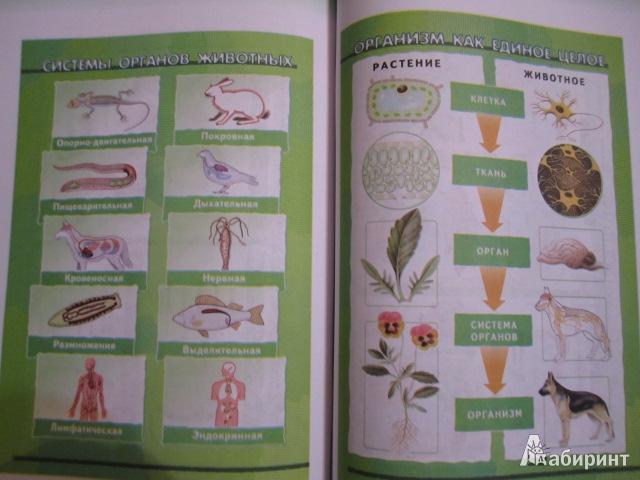 решебник по биологии 6 класс живой организм н.и.сонин
