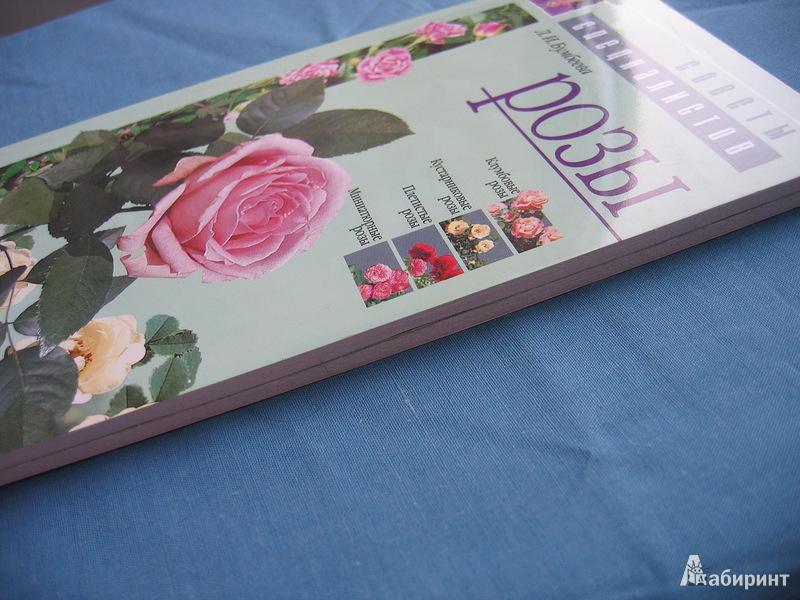 Иллюстрация 1 из 10 для Розы - Любовь Бумбеева | Лабиринт - книги. Источник: Костина  Светлана Олеговна