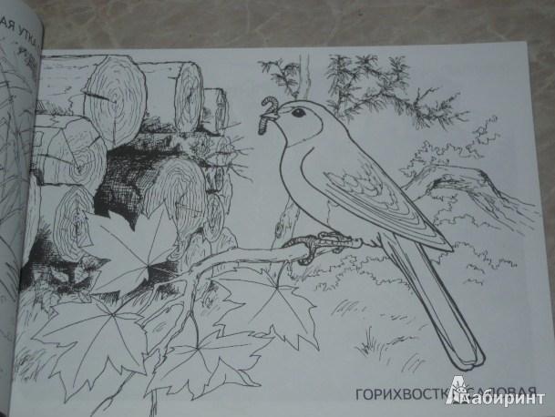 Иллюстрация 1 из 18 для Изучаем и раскрашиваем. Перелетные птицы | Лабиринт - книги. Источник: Iwolga
