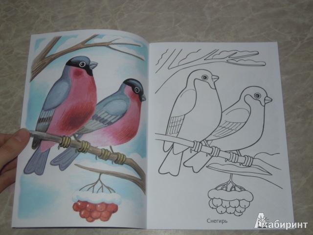 рисунки на тему зимующие птицы премиум-марки годами