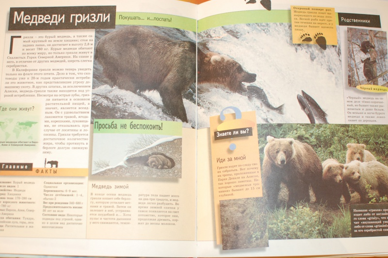 Иллюстрация 1 из 5 для Животные   Лабиринт - книги. Источник: Солодовникова Ирина Владимировна