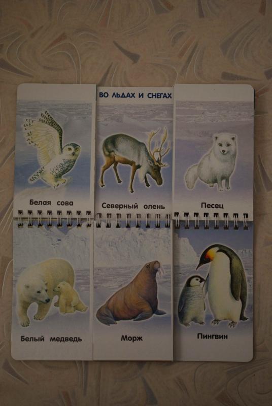 Иллюстрация 1 из 17 для Мир животных | Лабиринт - игрушки. Источник: Андреева  Надежда Викторовна