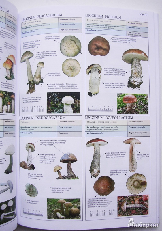 все о грибах пелле янсен купить