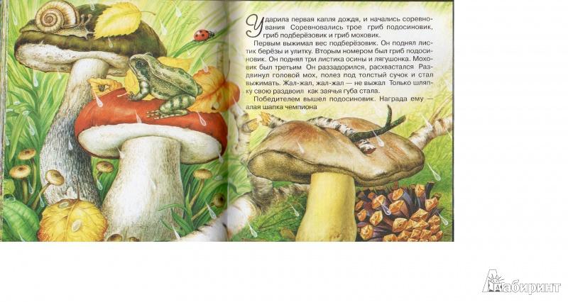 Иллюстрация 1 из 43 для Сказки лесной опушки - Бианки, Сладков, Пришвин, Шим | Лабиринт - книги. Источник: Fish-ечка