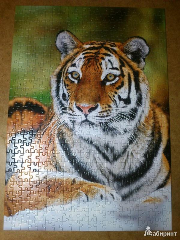 Иллюстрация 1 из 4 для Puzzle-500. Тигр (В-51267)   Лабиринт - игрушки. Источник: Ерёмин  Андрей Андреевич