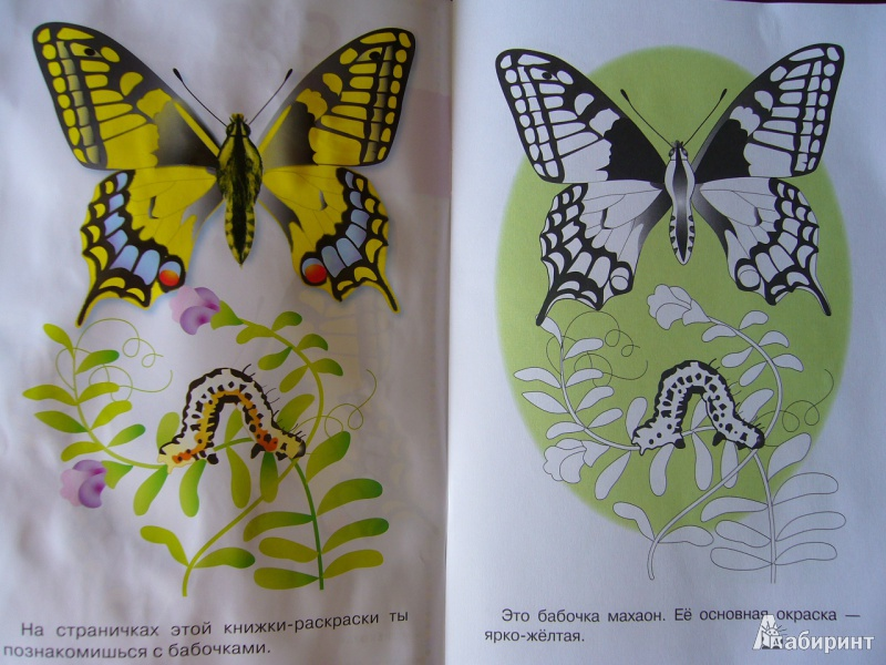 как рисуют бабочки разукрашивает белье