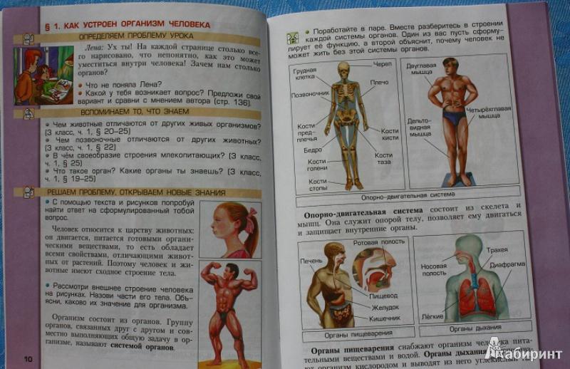 Иллюстрация из для Окружающий мир класс Человек и природа  Иллюстрация 6 из 39 для Окружающий мир 4 класс Человек и природа Учебник