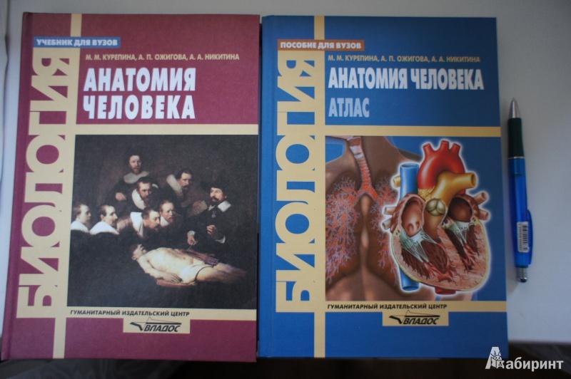 Иллюстрация 1 из 36 для Анатомия человека: Атлас - Курепина, Ожигова, Никитина | Лабиринт - книги. Источник: Ромашка обыкновенная