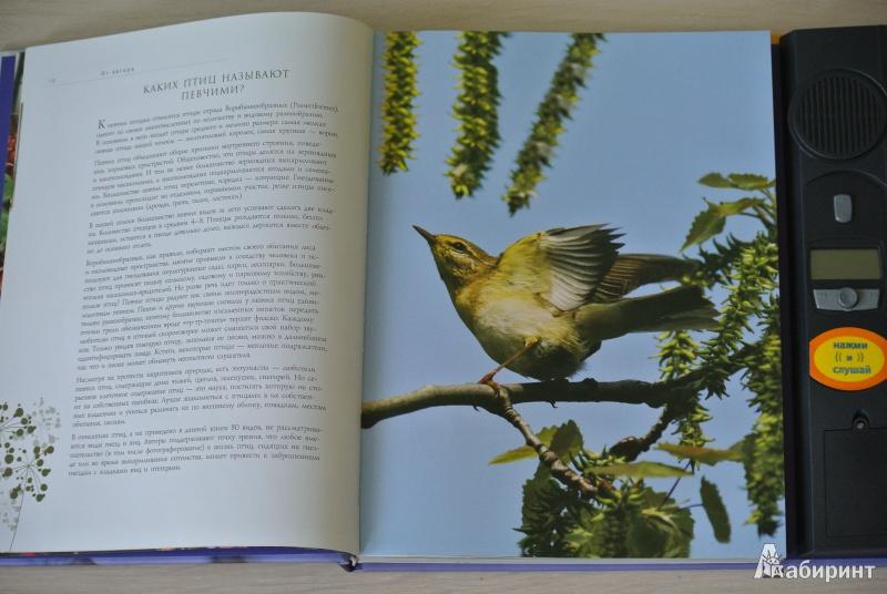Певчие Птицы звуковая Энциклопедия