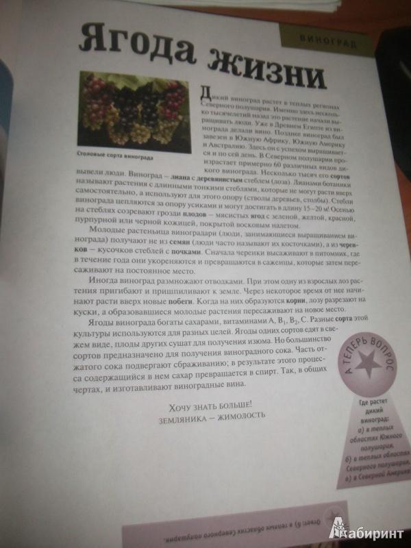 Иллюстрация 1 из 31 для Растения. Животные   Лабиринт - книги. Источник: Тарасенко  Екатерина Сергеевна