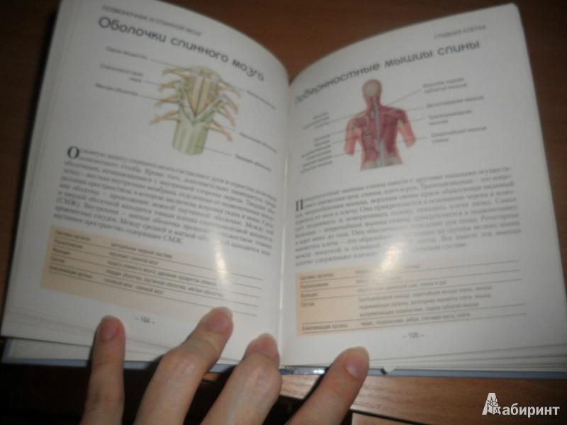 Иллюстрация 1 из 5 для Анатомия человека. Как работает ваше тело   Лабиринт - книги. Источник: юлия д.