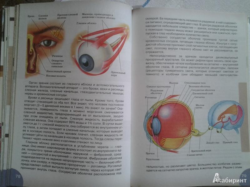 Учебник биологии 8 класс сонин и сапин скачать