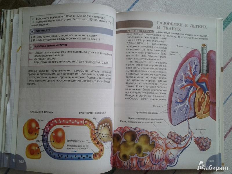 Гдз По Биологии 8 Класса Учебника