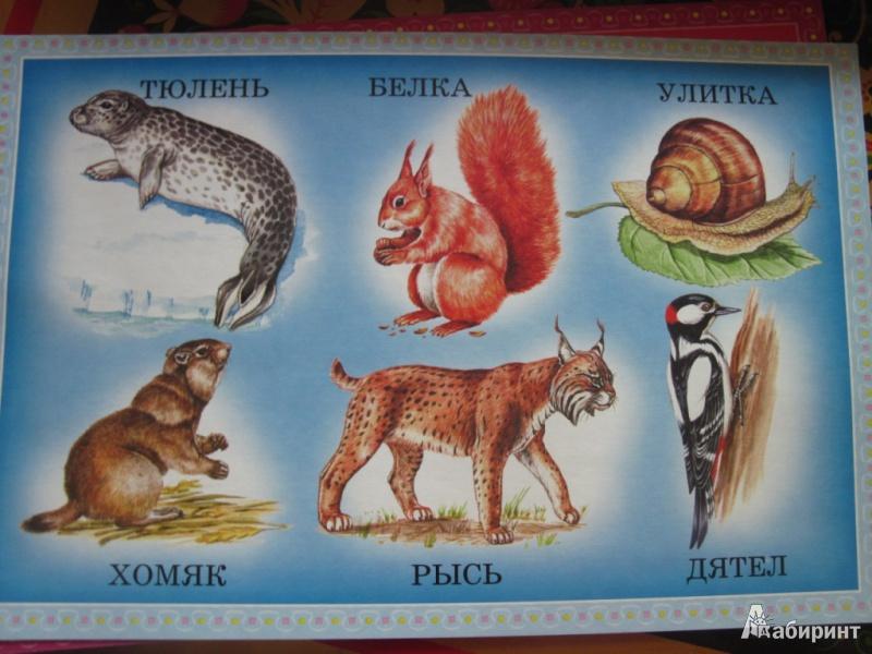 """Иллюстрация 1 из 18 для Лото """"Угадай животных"""". Для детей 3-7 лет - Сомов, Жарков   Лабиринт - игрушки. Источник: товарищ маузер"""