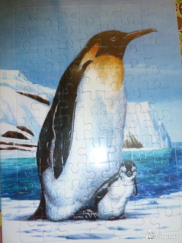 Иллюстрация 1 из 2 для Развивающие рамки. Живая природа. Пингвин | Лабиринт - игрушки. Источник: Попова  Валентина