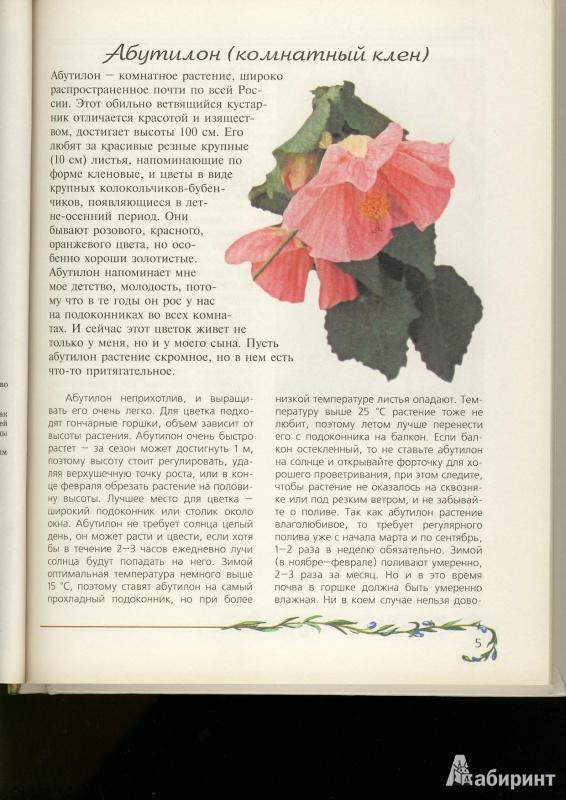Иллюстрация 1 из 15 для Любимые домашние цветы - Ганичкина, Ганичкин | Лабиринт - книги. Источник: ЛиС-а