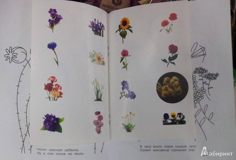 Иллюстрация 1 из 3 для Цветочные загадки - Кузнецова, Степанов   Лабиринт - книги. Источник: Ю  Елена