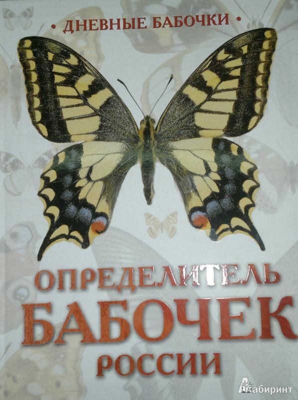Иллюстрация 1 из 24 для Дневные бабочки. Определитель бабочек России - Каабак, Сочивко   Лабиринт - книги. Источник: Леонид Сергеев