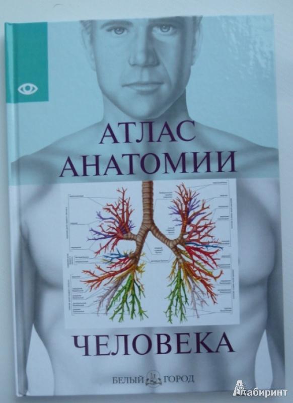 Иллюстрация 1 из 58 для Атлас анатомии человека   Лабиринт - книги. Источник: future-oriented