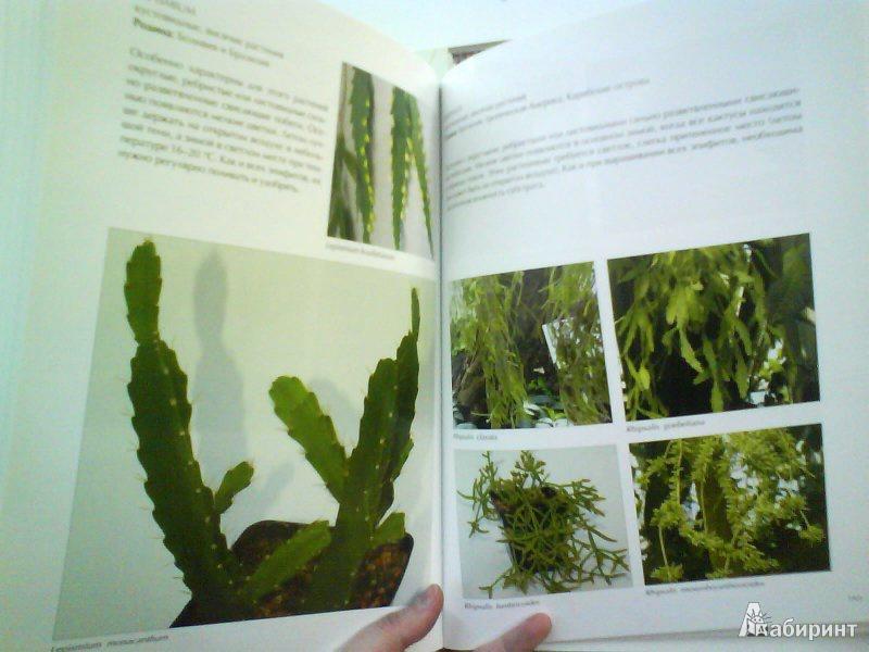 Иллюстрация 1 из 3 для Мои кактусы: Руководство по уходу за кактусами и другими суккулентами для всех любителей растений - Хельга Мозес | Лабиринт - книги. Источник: Вейла