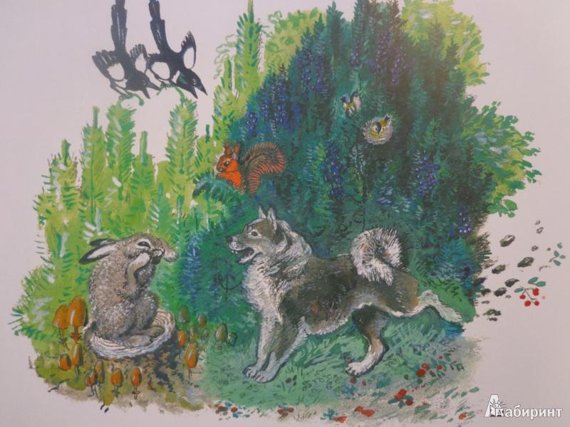 Иллюстрация 35 из 51 для Лиса и заяц - Евгений Чарушин   Лабиринт - книги. Источник: Дербилова  Людмила Владимировна
