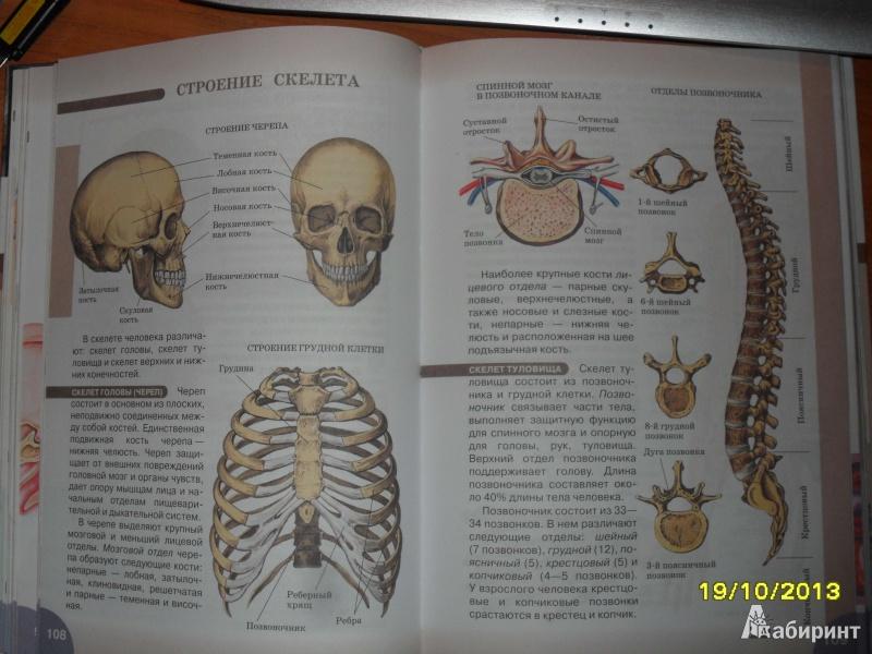 Книга по биологии 8 класс сонина и сапина