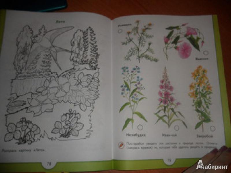 Иллюстрация 1 из 22 для Зеленая тропинка. Пособие для детей 5 - 7 лет - Андрей Плешаков   Лабиринт - книги. Источник: юлия д.