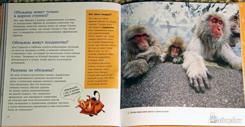 Иллюстрация 4 из 22 для Млекопитающие. Удивительная энциклопедия животных   Лабиринт - книги. Источник: Рыбалкин  Андрей