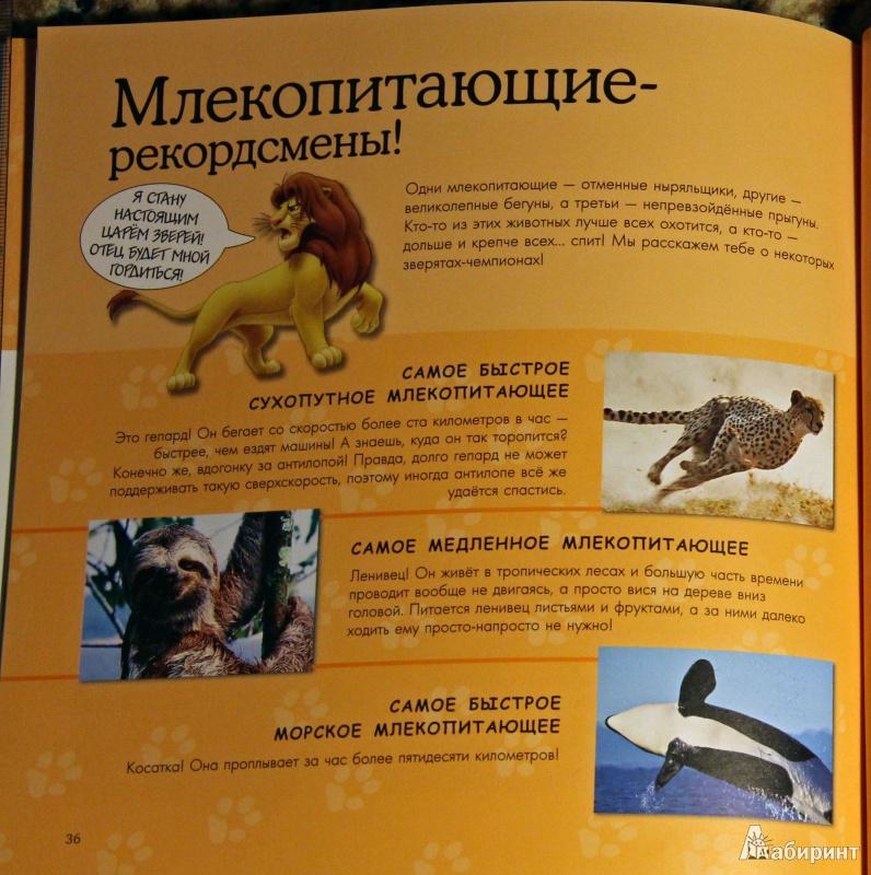 Иллюстрация 9 из 22 для Млекопитающие. Удивительная энциклопедия животных | Лабиринт - книги. Источник: Рыбалкин  Андрей