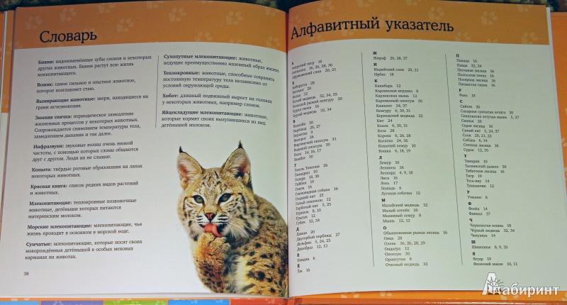 Иллюстрация 10 из 22 для Млекопитающие. Удивительная энциклопедия животных   Лабиринт - книги. Источник: Рыбалкин  Андрей