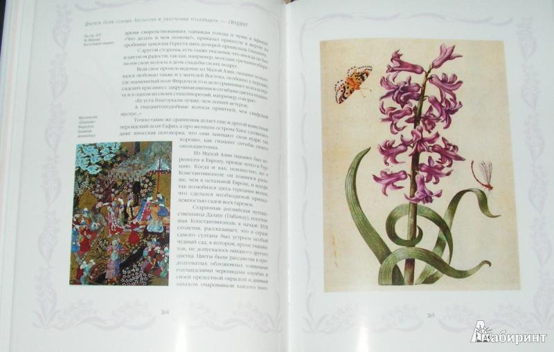 Иллюстрация 8 из 15 для Цветы в легендах и преданиях - Николай Золотницкий | Лабиринт - книги. Источник: Solen