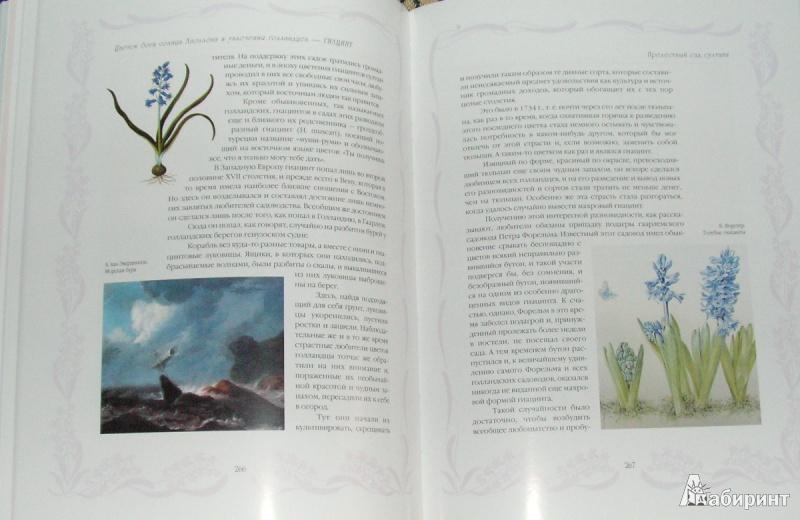 Иллюстрация 9 из 15 для Цветы в легендах и преданиях - Николай Золотницкий | Лабиринт - книги. Источник: Solen