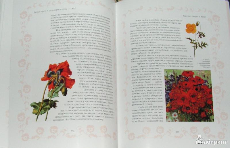 Иллюстрация 13 из 15 для Цветы в легендах и преданиях - Николай Золотницкий | Лабиринт - книги. Источник: Solen