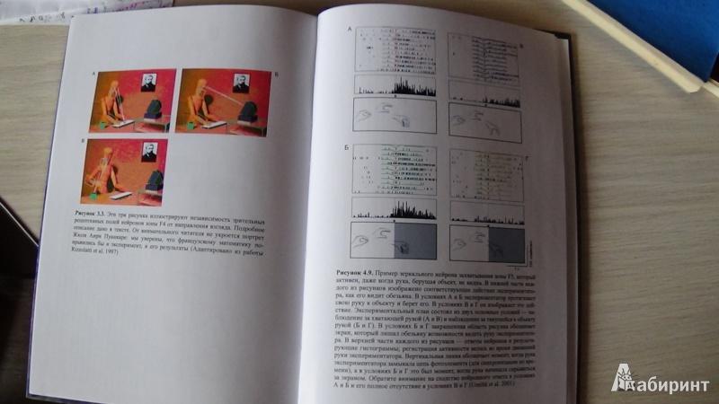 Иллюстрация 5 из 12 для Зеркала в мозге. О механизмах совместного действия и сопереживания - Риццолатти, Синигалья   Лабиринт - книги. Источник: Консультант по наукам