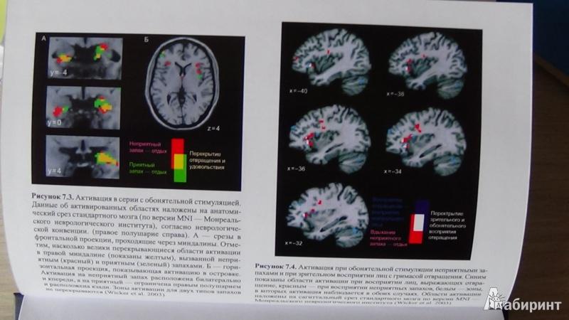 Иллюстрация 9 из 12 для Зеркала в мозге. О механизмах совместного действия и сопереживания - Риццолатти, Синигалья | Лабиринт - книги. Источник: Консультант по наукам
