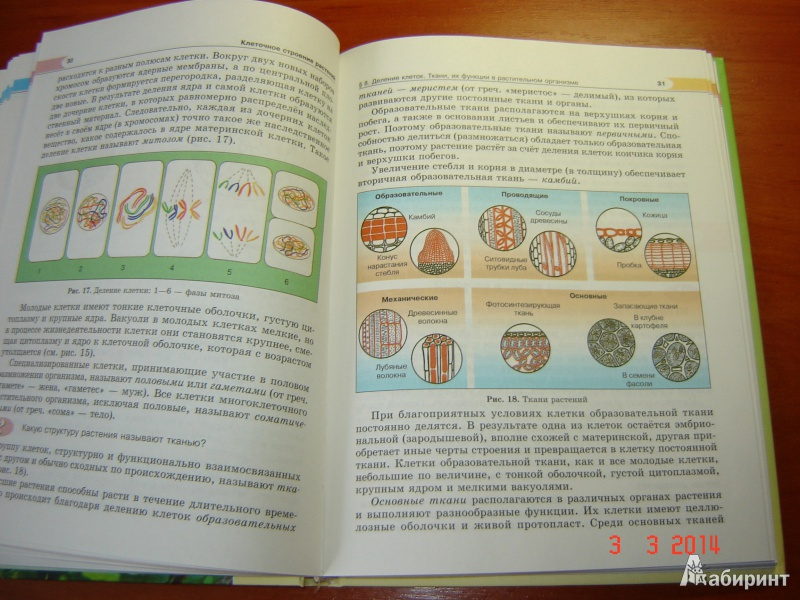 Биология класс ответы учебник 6 трайтак гдз