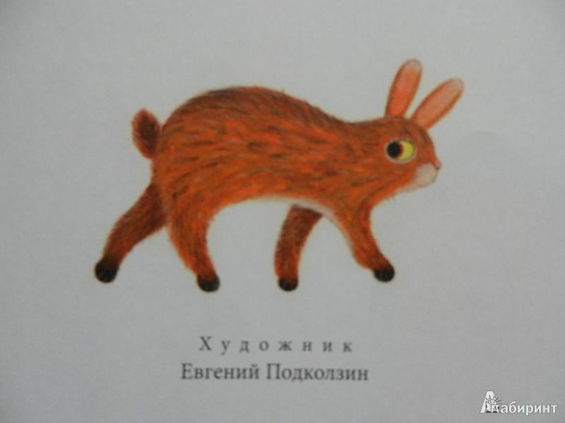 Иллюстрация 47 из 47 для Декоративный Зяка - Олег Корниенко   Лабиринт - книги. Источник: ИринаС