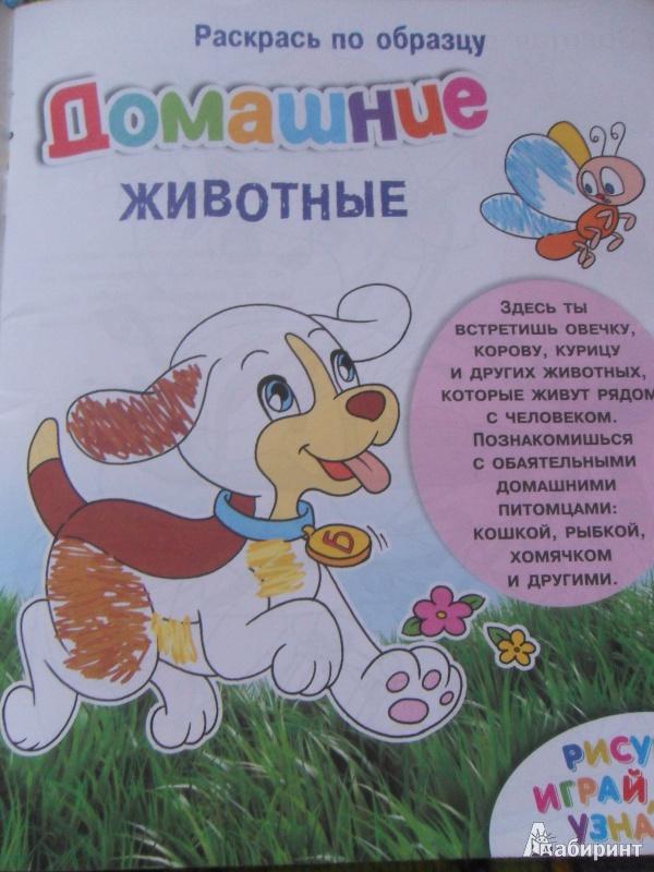 Иллюстрация 1 из 15 для Раскрась по образцу. Домашние животные | Лабиринт - книги. Источник: kirlyuma
