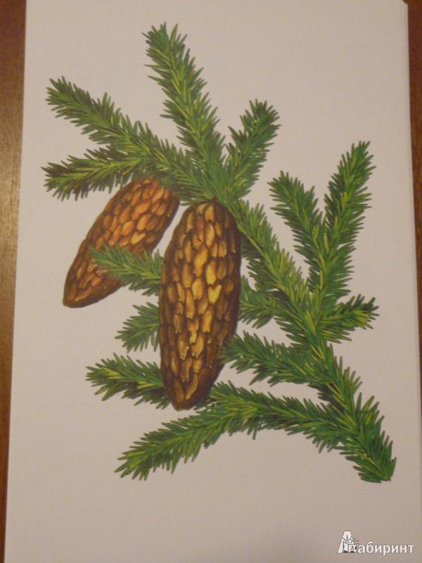 Иллюстрация 2 из 31 для Листья и плоды. Дидактический материал - И. Васильева | Лабиринт - книги. Источник: maria1978
