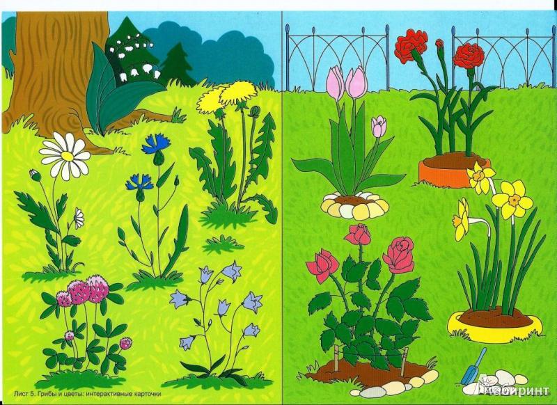 Картинки о природе для детей старшей группы, открыток для