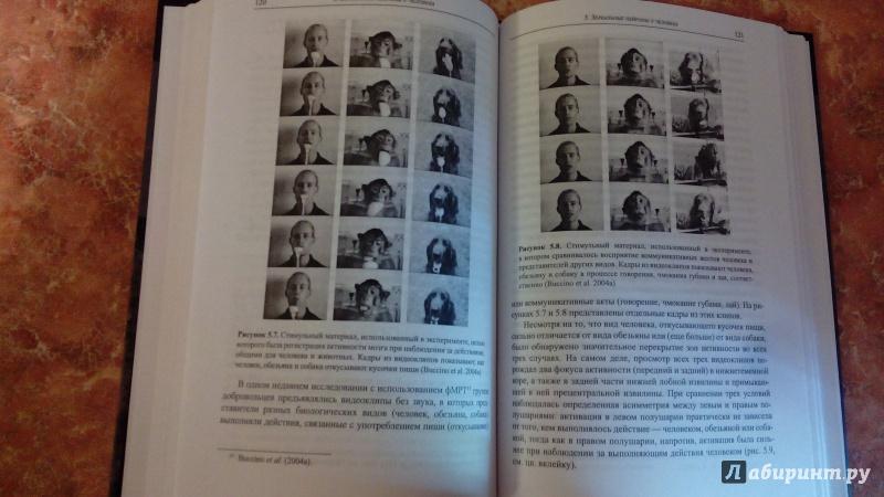 Иллюстрация 10 из 12 для Зеркала в мозге. О механизмах совместного действия и сопереживания - Риццолатти, Синигалья | Лабиринт - книги. Источник: Косова  мария