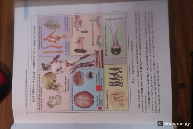 класс гдз биология рохлов 8 трофимова