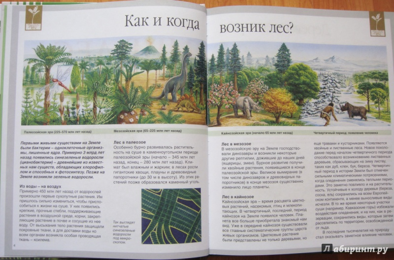 Иллюстрация 1 из 36 для Мир леса - Генри Эйнар   Лабиринт - книги. Источник: Зиганшина  Светлана
