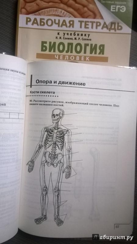 гдз 8 класс по биология рабочая тетрадь к учебнику сонина и сапина