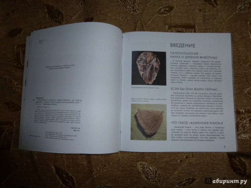 Иллюстрация 16 из 65 для Палеонтология в картинках - Ирина Яковлева | Лабиринт - книги. Источник: Книгомама
