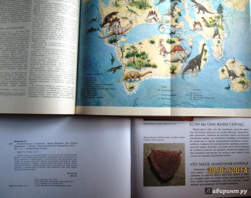 Иллюстрация 28 из 65 для Палеонтология в картинках - Ирина Яковлева | Лабиринт - книги. Источник: Алонсо Кихано